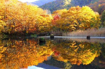 ◆錦秋の裏磐梯~大沢沼・曲沢沼は秋色の万華鏡