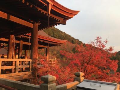 GoTo停止直前に京都をひとりで彷徨ってみた