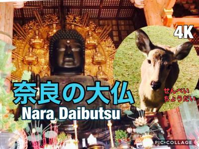 30年ぶりの奈良の大仏 鹿の聖地 奈良公園
