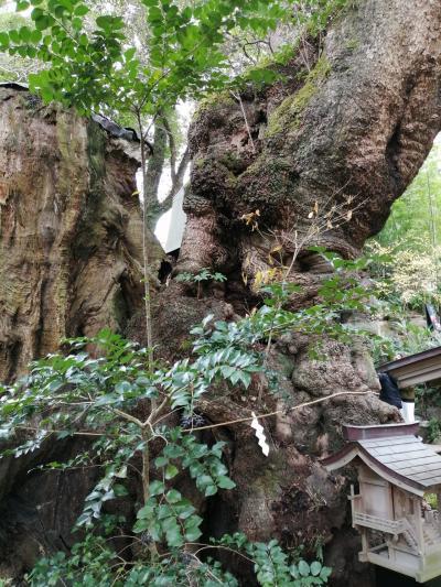 新年 熱海 来宮神社で祈願!