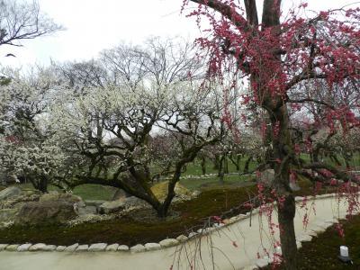 北野天満宮で観梅/猿回しも来ていたよ!◆JOECOOLの誕生日記念で京都へ《その4》