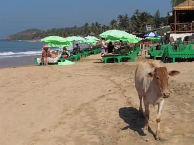 2008年~2009年 ドバイ経由でインド縦断の旅へ-C(ゴア・ハンピ編)