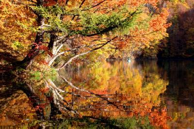 ◆錦秋の裏磐梯~Canadian Autumn Colors 裏磐梯フォレストスプリングス