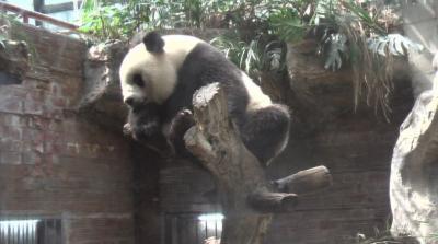 外出自粛だって、へっちゃらyo?!動物園で元気に遊んじゃおう♪の巻