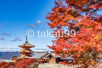 京都 紅葉の名所巡り(二週間) 行って良かった紅葉の絶景