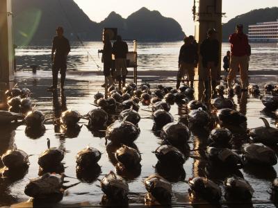 勝浦生マグロ市場と大峰奥駆けゴール地点 山男たちと紀伊半島半周中