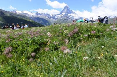 スイス花とハイキングの旅 ツェルマットのんびり散歩スネガ