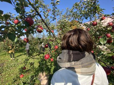GoToバスツアー☆湯葉、りんご、かに食べ放題ツアー