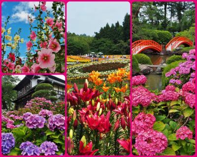 ☆2020年夏☆前編☆もっぱらお花を見に行くだけの夏だった・・・☆
