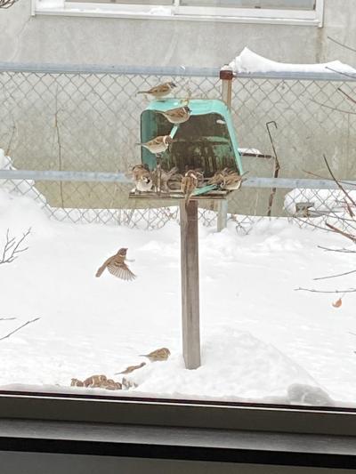 野鳥の餌付け始めました もふもふスズメとヒヨドリ