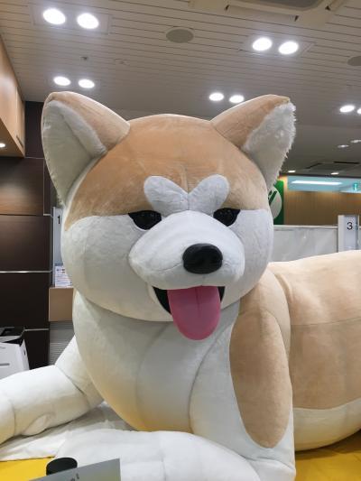 八王子駅みどりの窓口にいる巨大秋田犬に会いに行く!