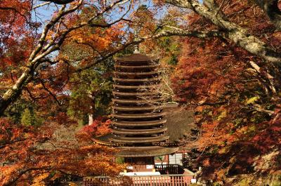 奈良・宇治の紅葉旅