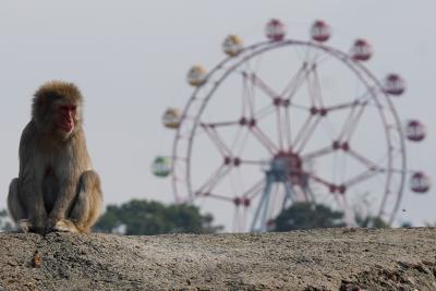 閉園前のみさき公園へ行ってきたお話 5 トラとライオンのランチタイムの部
