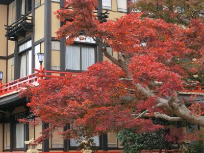 秋の箱根、湯河原紅葉巡り
