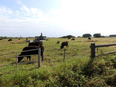 初めての石垣島は雨続き(その1/黒島編)