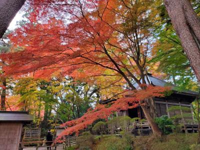 秋の平泉&松島の旅*1日目*