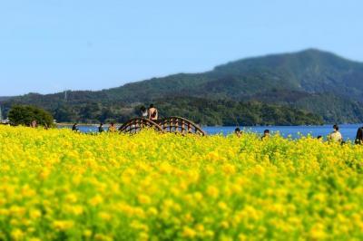 春はすぐそこまできています。南国鹿児島から(もうすぐ)春だより。