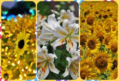 ☆2020年夏☆後編☆もっぱらお花を見に行くだけの夏だった・・・☆