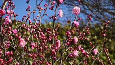 寒緋桜を見た後、JR中山寺駅行きのバスが来たので、中山寺の参拝に行きました その3。