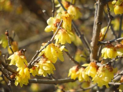 春の息吹を求めて所沢・南永井地区を散策しました。