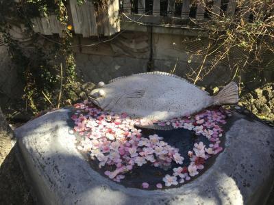 日本で1番?に咲くあたみ桜を見に一走り