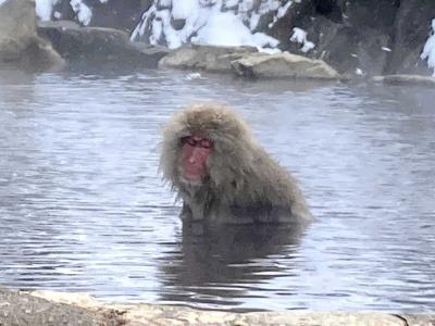 日帰り長野☆温泉お猿スノーモンキーと善光寺