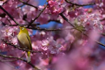 春を彩る花と鳥の競演♪♪