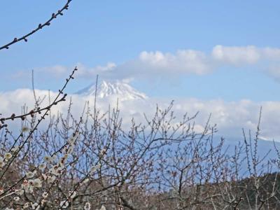 そろそろ梅が咲いたでしょうか岩本山公園へ行ってみました 2021.02.01