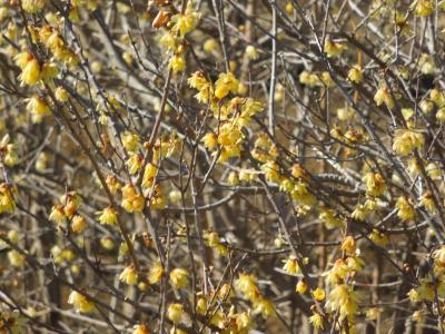 所沢市南永井付近の春の息吹を感じる風景