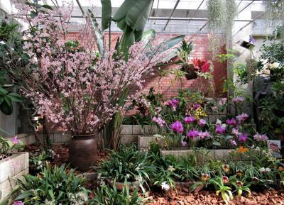 2021年2月 山口県・宇部市 その1 世界を旅する植物館でいろいろな花を見ました。