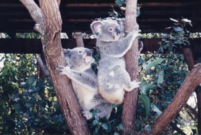 (思い出)1999  初めての子連れオーストラリア   ゴールドコースト