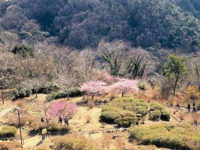 また行っちまった高麗山 八俵山 浅間山 やつるぎ神社