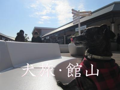 犬旅 ~館山・2020冬~