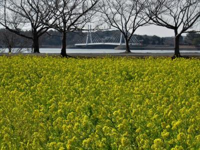 2021年2月 山口県・宇部市 その2 ときわ公園内散歩と湖畔の菜の花を見に行きました。