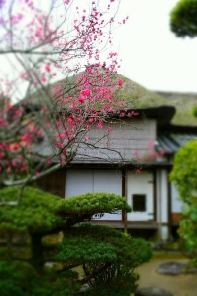 水郷のまち柳川の雛祭り『さげもんめぐり』 旧戸島家住宅
