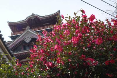 20210212-4 京都 伏見桃山城に行ってみます…なんか、少し廃墟な感じも?