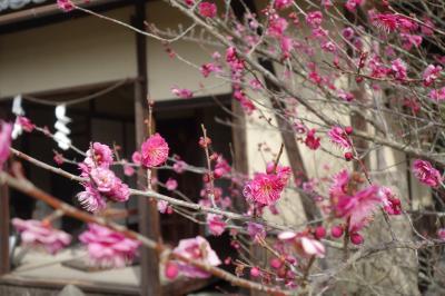 20210212-7 京都 乃木神社。乃木大将のお宮さんは、陛下のお近くに。