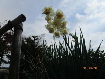 初春の丹沢大山・飯山観音初詣:ハイキング