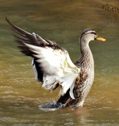 Japan 春はもうすぐ♪ 清瀬金山緑地公園で鳥の練習