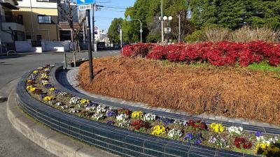 笹原公園の河津桜が咲き始めたと思い出かけました その2。