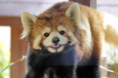 姫路市立動物園&姫路セントラルパーク 1ヶ月ぶりのレッサーパンダ紀行は県境を越えず訪問出来る一番遠い姫路の2園に行ってきました