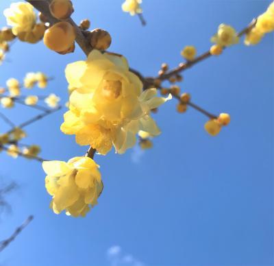春告花 その囁きはQue Sera, Sera