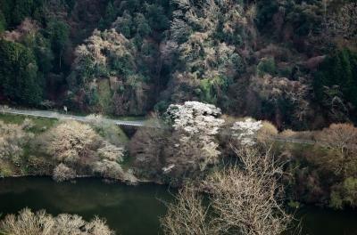 《2021. March》あみんちゅなにげに関西街歩きの旅奈良そのⅠ~月ヶ瀬梅渓梅と桜~
