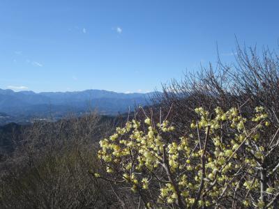早春ハイキング 宝登山のロウバイ Hiking in early spring to Hodosan