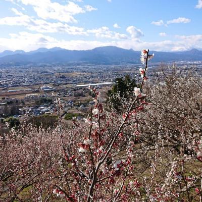 梅の花が見頃の曽我梅林散策と見晴台へプチ登山