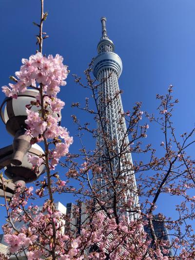 春が近づく浅草散策、スカイツリーを訪ねて