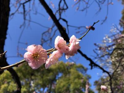 2021年2月 鎌倉の花めぐり