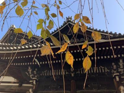 京都 親娘でランチ