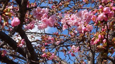 ミモザの花を探して街中を徘徊 2日目の午後編 その5完。