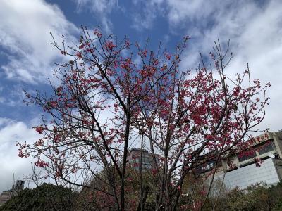旧正月の台北市内